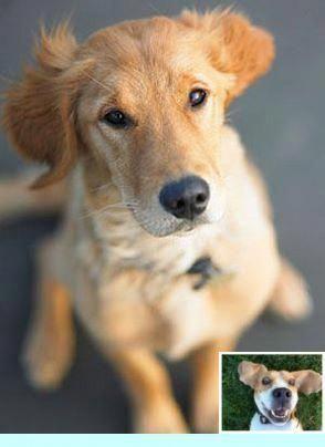 Asmrfood Viralvideo Icanteven Mydogismy Puppytrip In 2020 House Training Dogs Dog Potty Training Training Your Dog