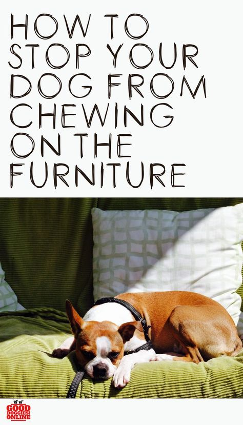 How To Get A Dog To Stop Licking Furniture