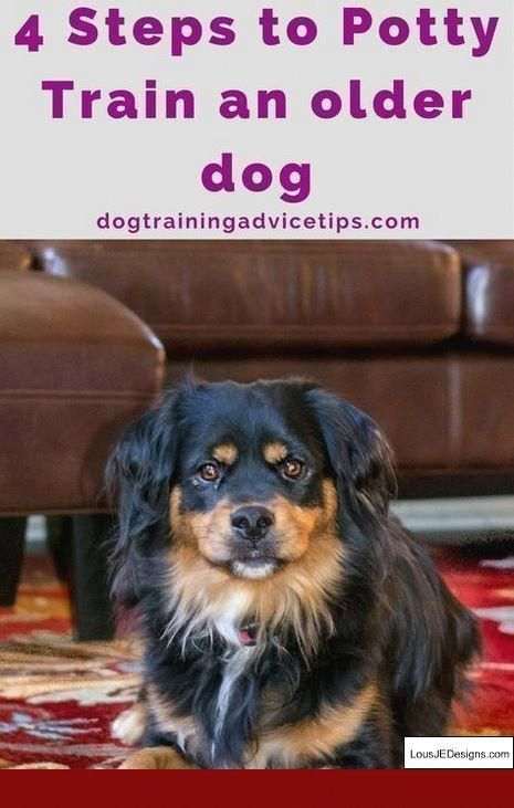Taking Care Of Your Pet Dog Calls For Work You Must Be Certain