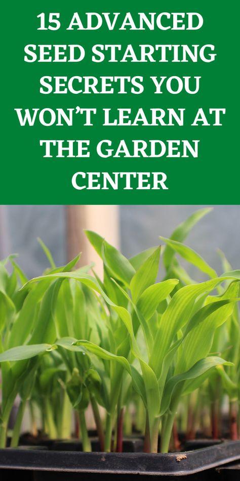 Growing Flowers, Growing Plants, Growing Vegetables, Garden Yard Ideas, Lawn And Garden, Garden Tips, Garden Shrubs, Garden Plants, Home Vegetable Garden