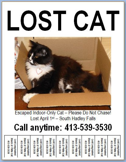 32 Lost Cat Poster Template In 2020 Lost Cat Poster Poster Template Cat Posters