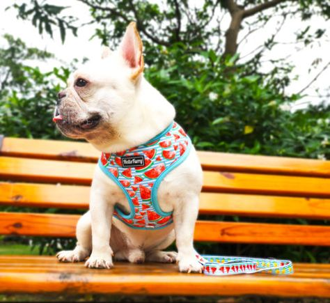 Reversible Dog Harness Pineapple Watermelon Fruit Hellofurry Singapore Dog Harness Responsible Pet Owner Pet Harness