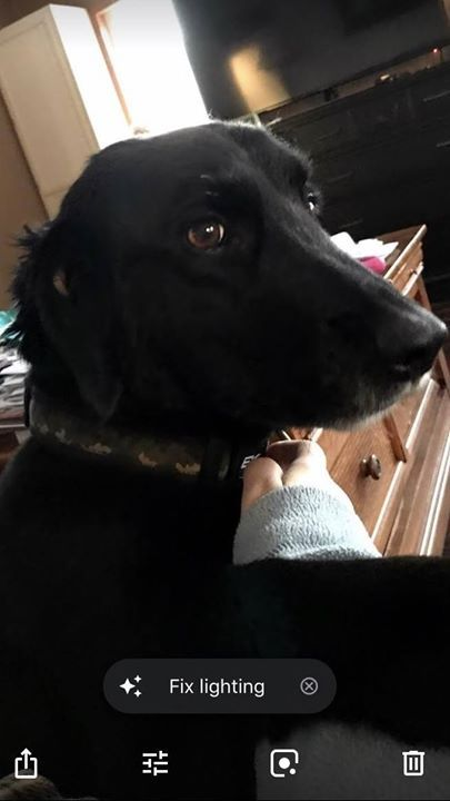 Lost Dog Milaca Labrador Retriever Spaniel Mix Male Date Lost 11 28 2018 Dog S Name Trigger Breed Of Dog Labrador Retriever Losing A Dog Dogs Dog Ages
