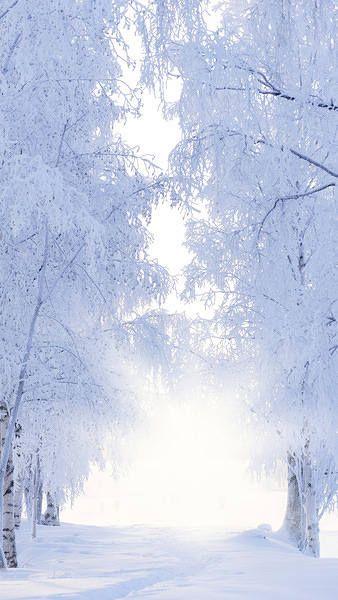 Winter Iphone 6s Plus Wallpaper Winter Landscape Iphone
