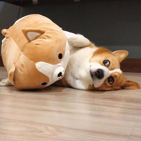 Check Out Our Site For More Information On Cute Dogs It Is An