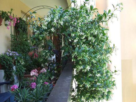 Arredare Balcone Di Casa Balconi Fiori