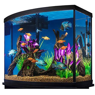 Marineland 38 Gallon Aquarium Starter Kit Fish Starter Kits Petsmart With Images Fish Tank Supplies Cool Fish Tanks