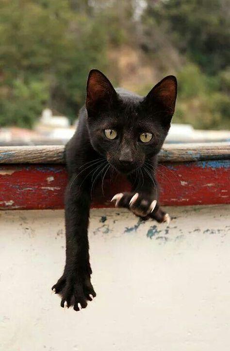 Анимация прозрачном, картинки про черных кошек смешные