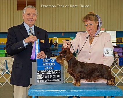 Willow Springs Miniature And Standard Wirehaired Dachshunds Show