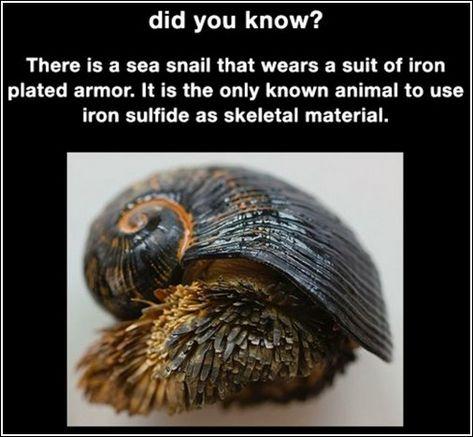 vicces tényeket aschelminthes