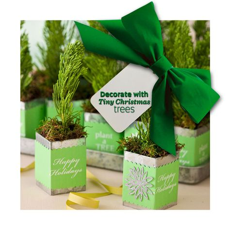 It's never too late to add one more tree to your Christmas decorating! Ideas for decorating with tiny trees: http://www.midwestliving.com/homes/seasonal-decorating/decorate-miniature-christmas-trees/