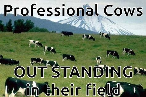 Outstanding Cows At Least In Their Specific Field
