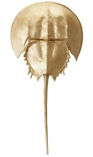 Gold Mica Horseshoe Crab Alternative Wall Decor With Images