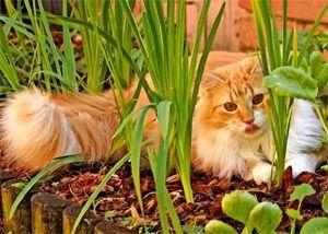 Eloigner Les Chats Du Jardin Potager Jardin Potager Potager