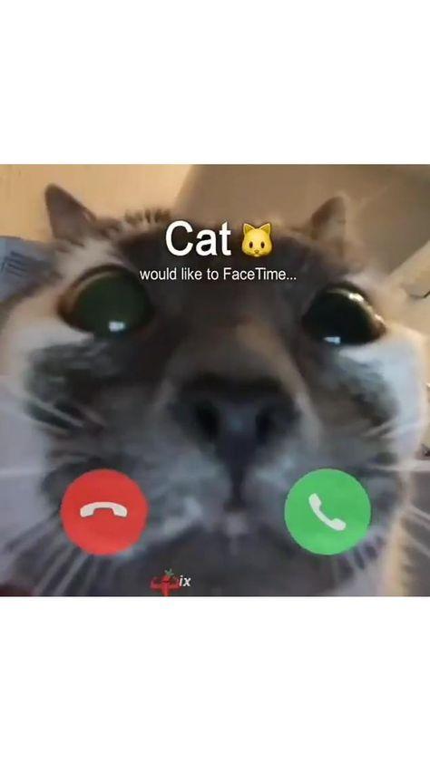 Cat call video 😻