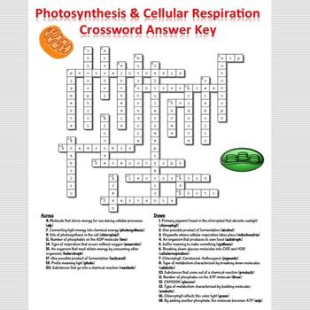 Image Result For Photosynthesis And Cellular Respiration Crossword