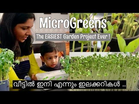 Microgreens In Malayalam How To Grow Microgreens At Home Indoor