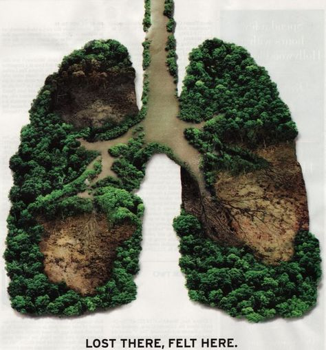 Trees are the lungs of our earth! Protect the rainforests.      Ancient forests are disappearing before our eyes. Not only does forest loss eliminate wildlife habitat and harm biodiversity, but tropical deforestation releases tons of greenhouse gases that contribute to climate change. Help us protect forests and the climate.     Read more.