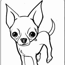 Chiwawa Coloring Pages Teacup Chihuahua Chihuahua Coloring Pages