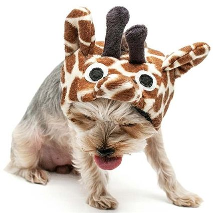 Your Very Own Mini Giraffe For Spooky Day Giraffe Dog Pet Costume