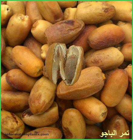 تمر الباجو التونسي قسم التمور مع الصور قسم التمور انواع الاسماك مع الصور الموقع الزراعي ومنوعات اخرى Vegetables Food Potatoes