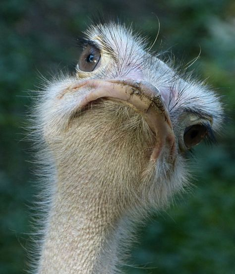 строительство смешные фото страуса новые очень смешные стала мамой