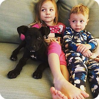 Media Pa Great Dane Mastiff Mix Meet Pickle A Puppy For