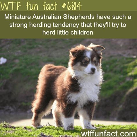 17 Fun Facts About Animals That Might Surprise You