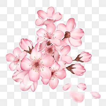 A Hand Painted Blooming Cherry Blossoms And Sakura Buds Cherry Blossom Clipart Cherry Blossoms Sakura Petals Png Transparent Clipart Image And Psd File For F Cherry Blossom Petals Floral Wreath Watercolor