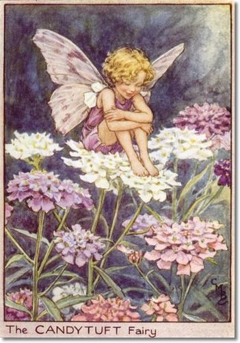 Cicely Mary Barker - Flower Fairies of the Garden - The Candytuft Fairy Painting