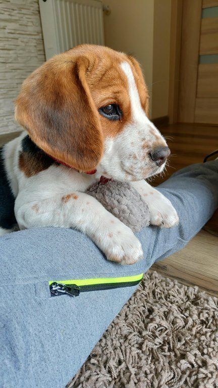 Stunning Hand Crafted Beagle Accessories And Jewelery Available At