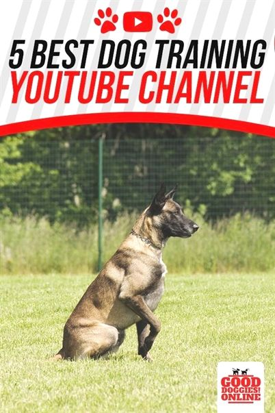Your Dog Should Be Able To Respond To Your Commands Dog Training Police Dog Training Training Your Dog