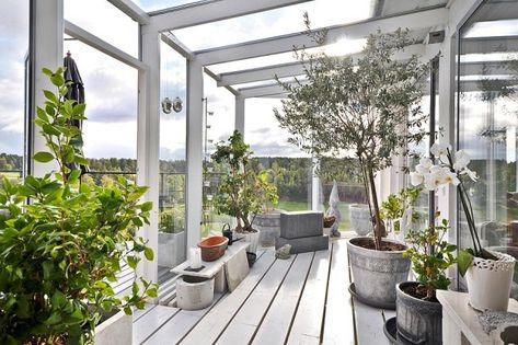 wintergarten gestaltungsideen pflanzen olivenbaum orchideen - wintergarten als wohnzimmer