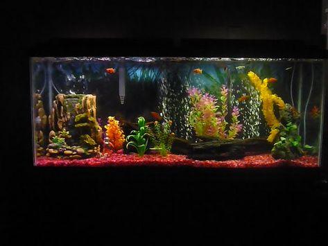 Pin By Shawna Holbrook On Fishtanks Fish Tank Aquarium Fish Tank 10 Gallon Fish Tank