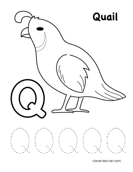Q Stands For Quail Color Sheets For Children Alphabet Activities