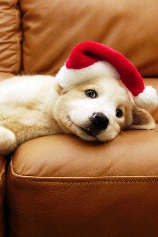 Christmas Puppy Iphone 5 Wallpaper 320 215 480 1 Cuteiphonewallpaperstumblr Iphone Wallpaper Iphone Christmas Christmas Puppy Pop Culture Halloween Costume