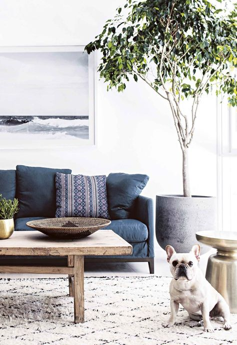 The living room area features a berber-style rug and is paired with an indoor potted tree and upholstered navy sofa. A rustic timber coffee table adds a rustic touch.