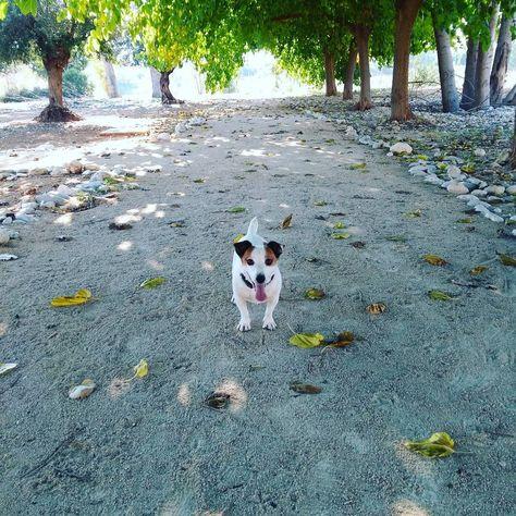 dog_features @maiterron : Pequeños momentos...