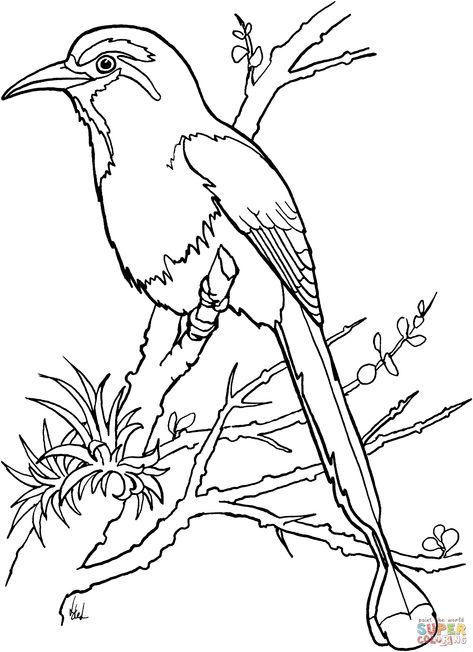 Http Animalia Life Com Image Php Pic Images Torogoz Coloring