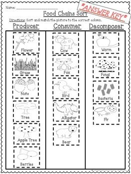 Glamorous producers consumers and decomposers worksheets Wonderful