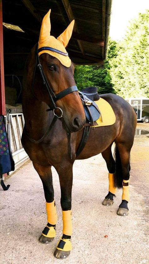 What Colour Suits My Horse? Matchy Colour Tips With Photos