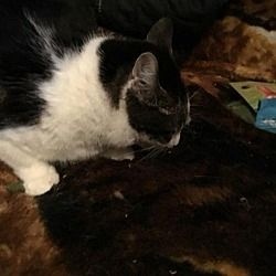 Available Pets At Happy Days Dog And Cat Rescue In Livonia Michigan Cat Rescue Dog Cat Cats