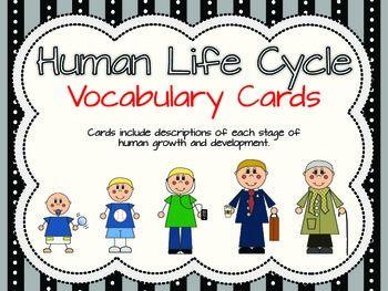 Human Life Cycle Vocabulary Cards Human Life Cycle Life Cycles Vocabulary Cards