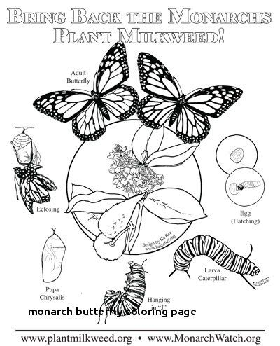 79 Unique Image Of Butterfly Coloring Pages For Adults Check More