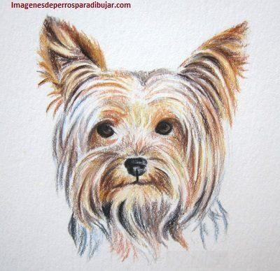 Dibujos Coloreados De Perros Dibujados Para Imprimir A Color