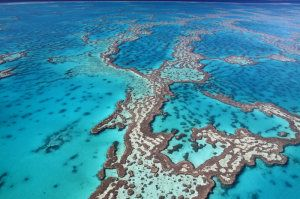 Surviving storms: Coral reefs are critical for risk reduction and adaptation -- ScienceDaily