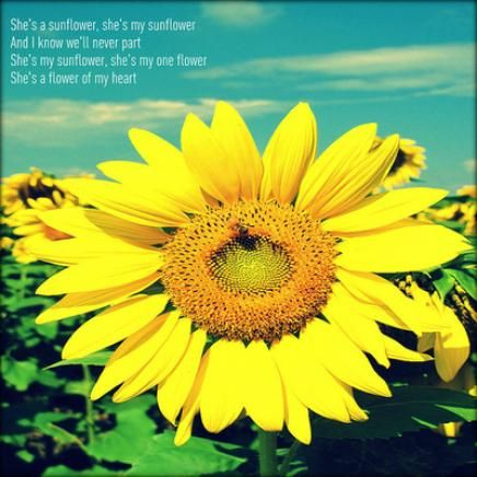 funny sunflower quotes