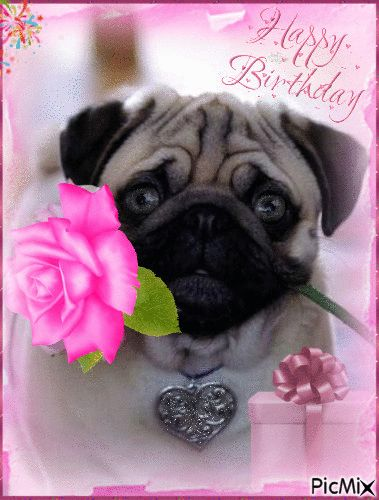Pug Happy Birthday gif