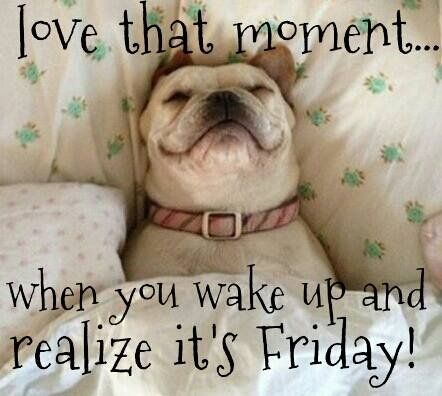 Love that Moment, when you wake up and realize it's Friday!  Dogs Quote  #dogQuote #dogs #animals #pets