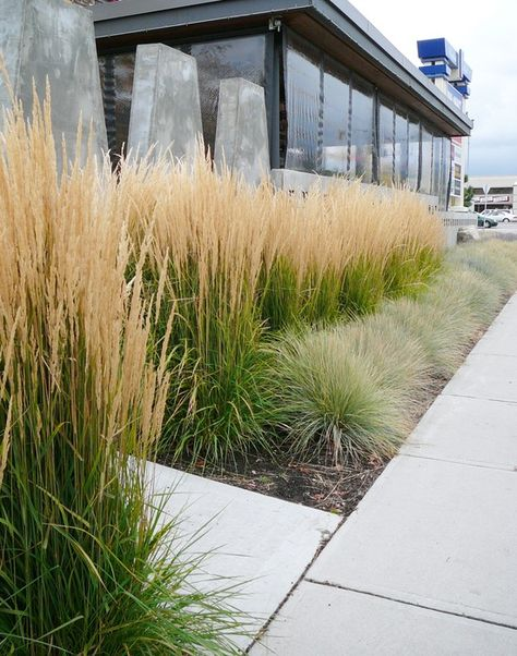 karl foerster & xeriscape - plant native grasses and perennials to save water- good idea for side of my house